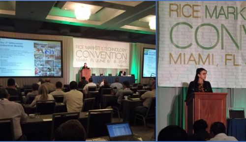 Colaboradora do Labgrãos palestra na Rice Market & Technology Convention, em Miami