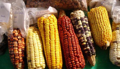 Feira de Sementes Crioulas e Alimentação