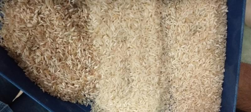 Secagem, armazenamento e conservação de arroz - Teórico e Prático